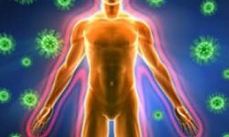 Імунна система людини - головний страж здоров`я