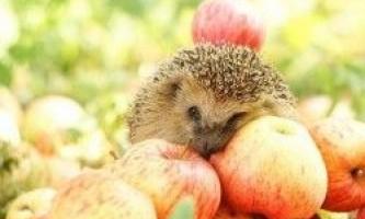 Яблучний спас: історія свята