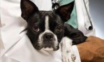 Епілепсія у собак