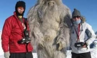 Йеті виявився найдавнішим видом полярних ведмедів