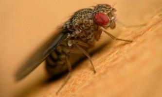 Чому необхідно боротися з кімнатними мухами?