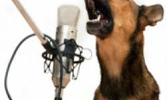 Як швидко відучити собаку гавкати?