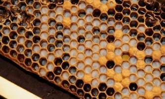 Як позбутися від алкогольної залежності за допомогою перги і меду