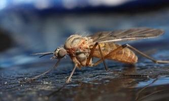 Як позбутися від комарів в будинку і квартирі?