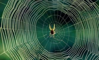 Як позбутися від павуків в квартирі?