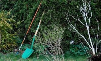 Як краще посадити цибулю для гарного врожаю