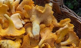 Як маринувати гриби: 5 цікавих рецептів