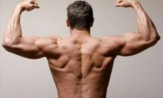 Як накачати найширші м`язи спини