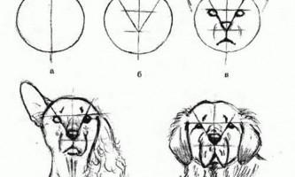 Як намалювати собаку олівцем поетапно