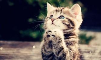 Як навчити кішку командам?