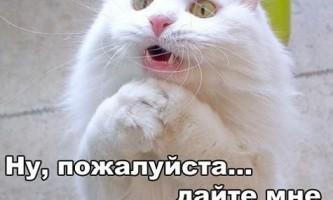 Як назвати кота?