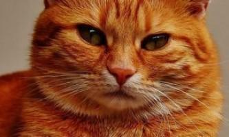 Як назвати кошеня, щоб ім`я звучало красиво і відображало риси його характеру