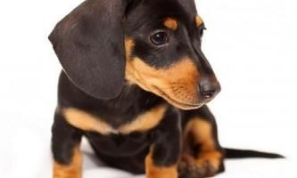 Як назвати собаку?