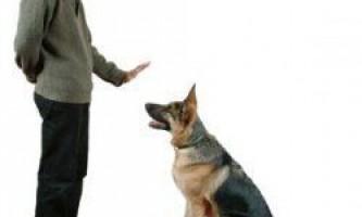 Як потрібно дресирувати собаку?