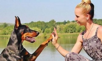 Як навчити собаку давати лапу