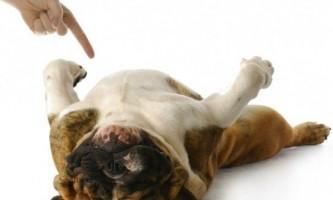 Як навчитися собаку команді «помри!»