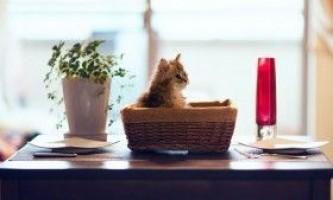 Як відучити кішку або собаку лазити на стіл?