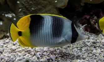Як підібрати фільтр для акваріума