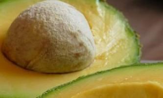 Як посадити і виростити авокадо з кісточки