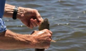 Як правильно ловити рибу на донку