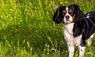 Як правильно навчати собаку команді «апорт»
