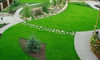 Як правильно посадити газон?