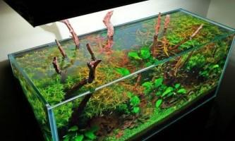 Як правильно склеїти акваріум