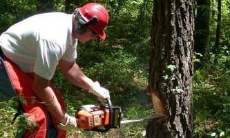 Як правильно спилювати дерева різної товщини