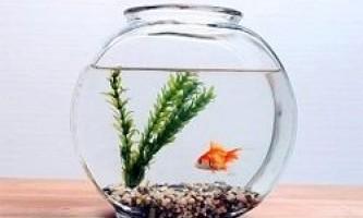 Як правильно вибирати акваріумних рибок