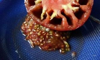 Як приготувати насіння томатів зі своїх помідор?