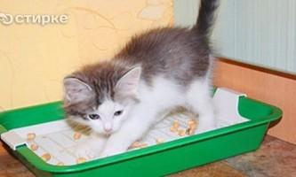 Як привчити кошеня до лотка