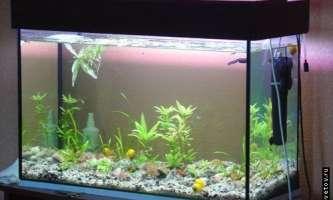 Як зробити акваріум своїми руками