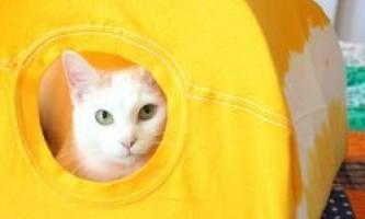 Як зробити будинок для кішки (кота)