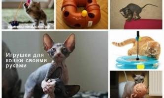 Як зробити іграшку для кота?