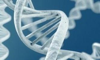 Як зламати генетику в бодібілдингу?