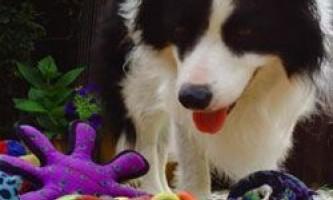 Як собаки розуміють значення слів?