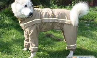 Як уберегти собаку від кліщів?