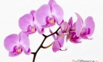 Як доглядати за орхідеєю будинку