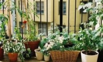 Як влаштувати город на балконі