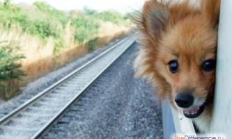 Як везти собаку в поїзді?