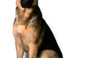 Як вибрати домашня тварина