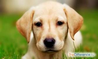 Як вибрати породу собаки