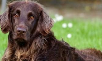 Як вибрати собаку для квартири