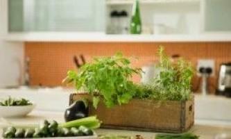 Як виростити зелень і овочі в кімнаті?