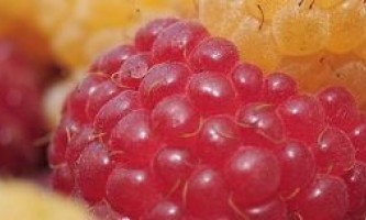 Як заморозити свіжу малину, зберігши її корисні і смакові властивості