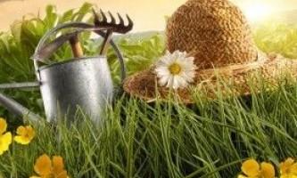 Яка робота в городі, саду, квітнику очікує в серпні?
