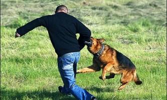 Яке зір у собак?