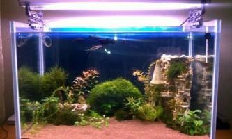Який грунт краще для акваріума?