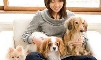 Яку собаку завести в квартирі