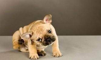 Краплі від кліщів для собак: які краще?